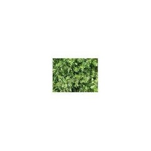 Armoise 100g - Artemisia Vulgaris - plante en vrac