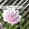 Mauve 30 grammes - Feuilles séchèes - Malva Sylvestris