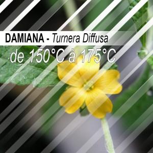 Damiana - 30g